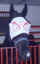 http://www.equestrian.ru/forum/userpics/6867-u_8e02b6.jpg