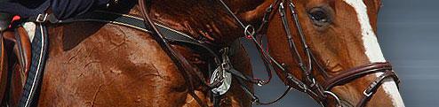 equestrian.ru