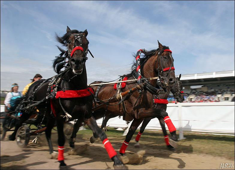 http://www.equestrian.ru/photos/alexk/a_e8986e.jpg