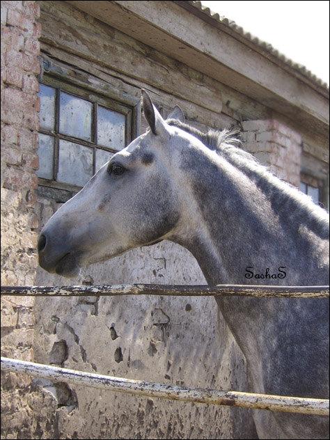 Конь из предъидущей работы