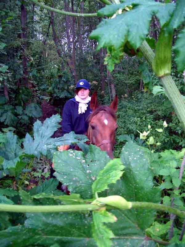 Естьв Ваулине и свои джунгли - росошные заросли борщевика... К концу лета они полностью скрывают всадника