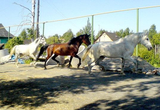 Офелия, Машка и Булка торопятся на поле