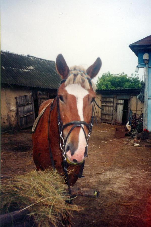 Бабушкин конь
