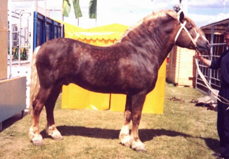 Мстиславский конезавод. Жеребец Паслен, 1992 г.р. (Сервиз-Палема), Был производителем до 2005 года