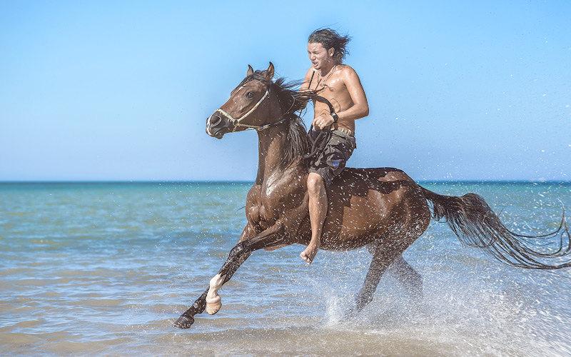 Перенесемся на берег Красного моря. Sunny Horse Stable (Египет, Хургада).