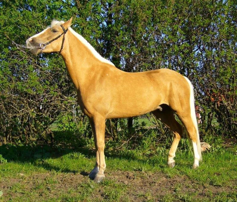 вот ещё одна желтая лошадь...только без яблок.....