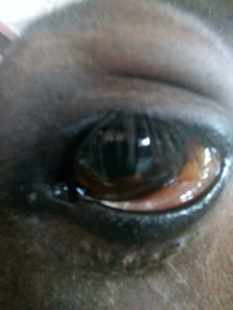 Проблема с глазом