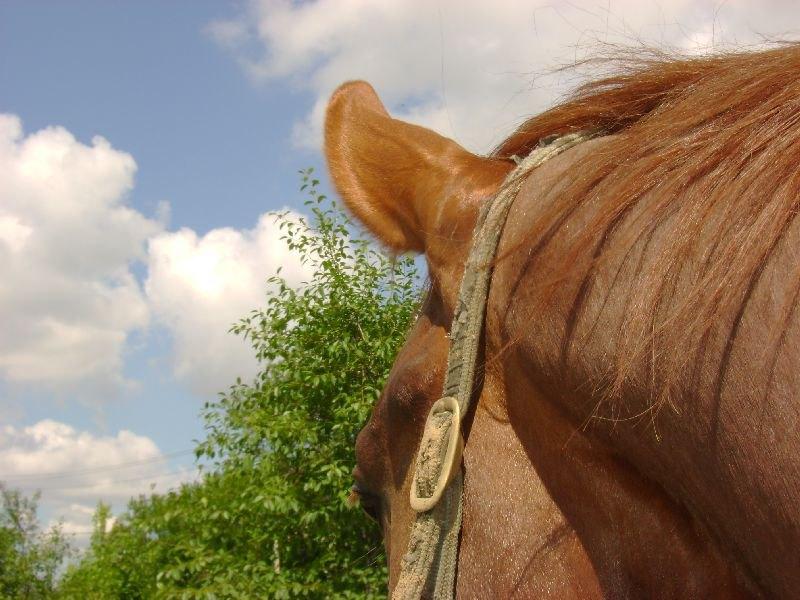 И лошадь!!