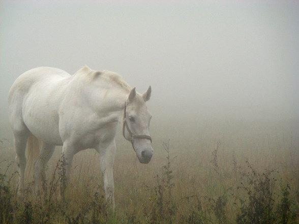 ...Лошадь, белая лошадь,.. как она там, в тумане....