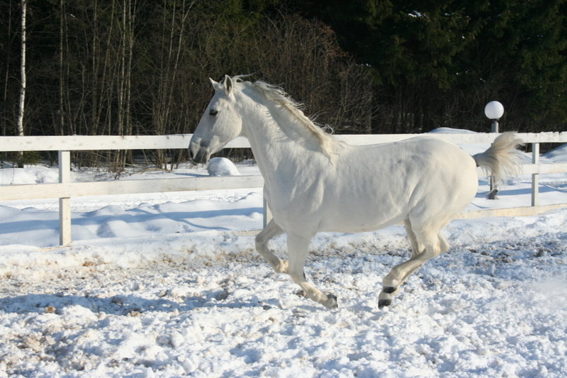 Андалуз в снегу это прикольно
