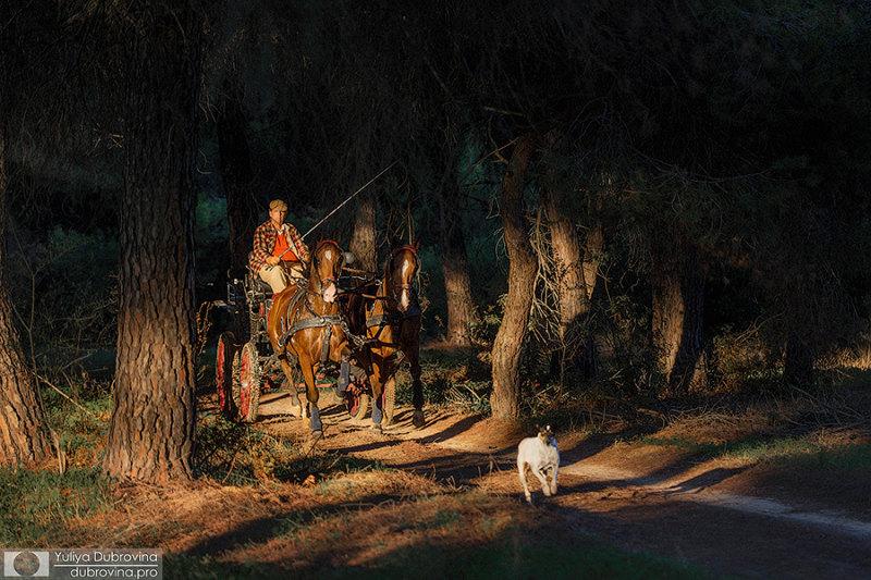 Отработаны и лошади и фотограф, бегущий впереди)