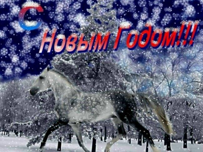 """Всё сильнее и сильнее хочется снега!!!!!!!! До Нового Года осталось всего две недели...Дальше вы сами занете.... """"Помог"""" мне жеребец Раф и, естесственно, человек, его снявший))"""