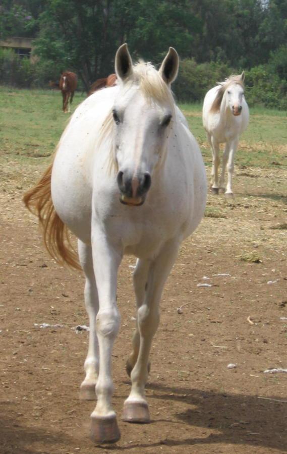 Бело-конная мафия