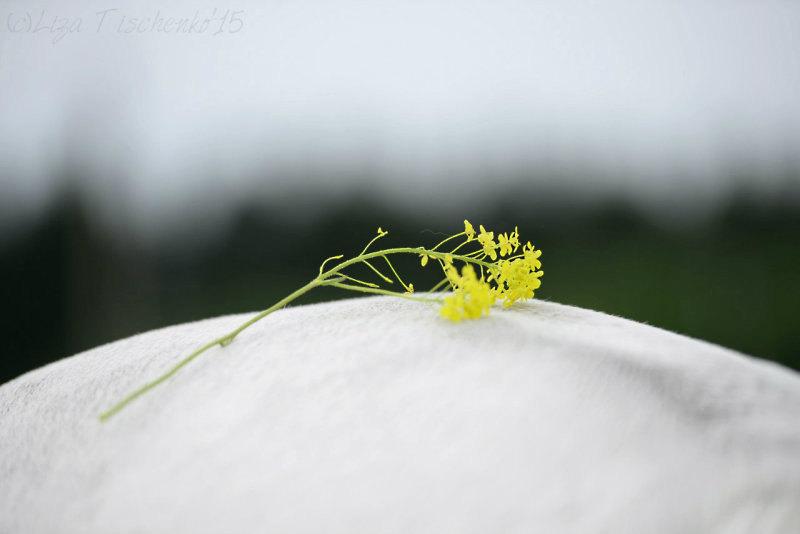 Желтая капля на белой попе