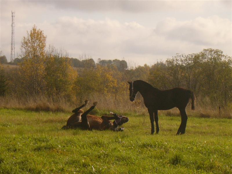 Гипюр и Паэлья в полях