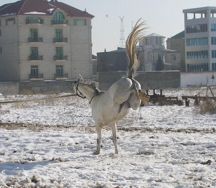 бешеный коняшка :))