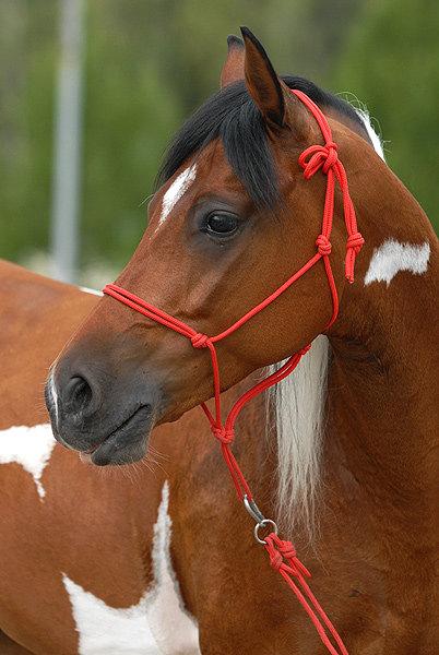 лошадь, которую узнаешь издалека =)