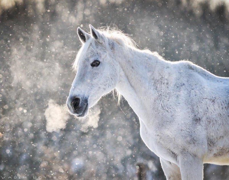 Терский мерин Тёма под грибным снегопадом:)