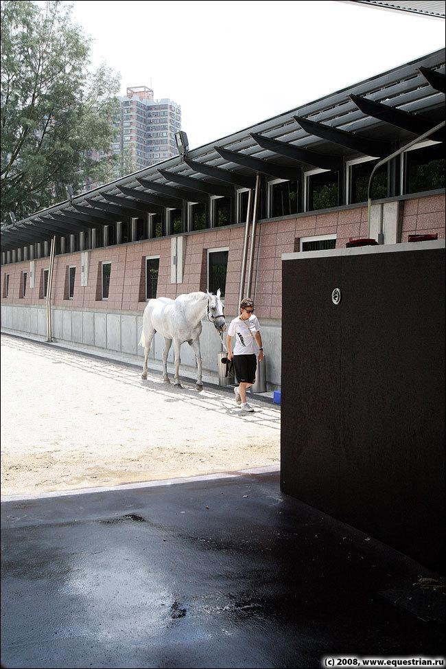 Олимпийские конюшни