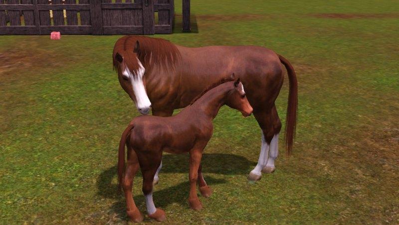 Мои лошадки)