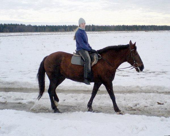 Тот же пасмурный день, у лошадок соответствующее настроение
