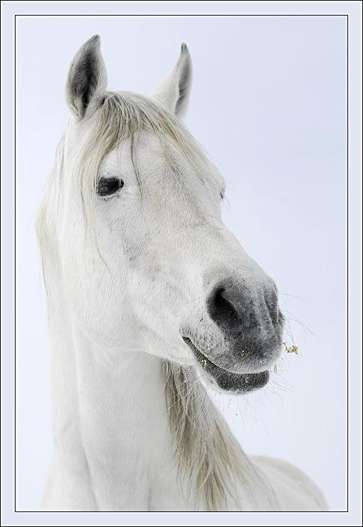 Как я люблю когда лошади улыбаются!
