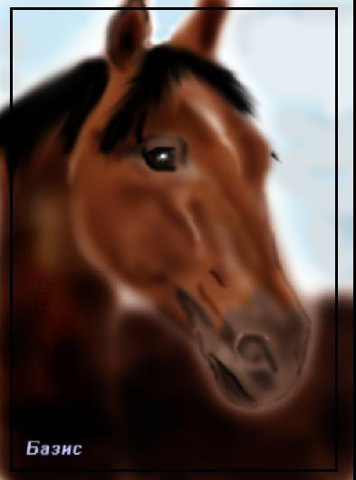 рисунок сделан в фотошопе. Арабский жеребец Базис - участник конской выставки Эквирос-2005