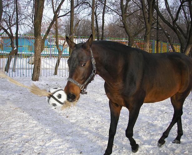 Это наш Жорик - заядлый футболист