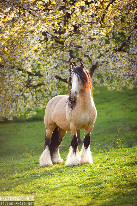 просто влюбилась в его невероятный характер и красоту:) Германия.