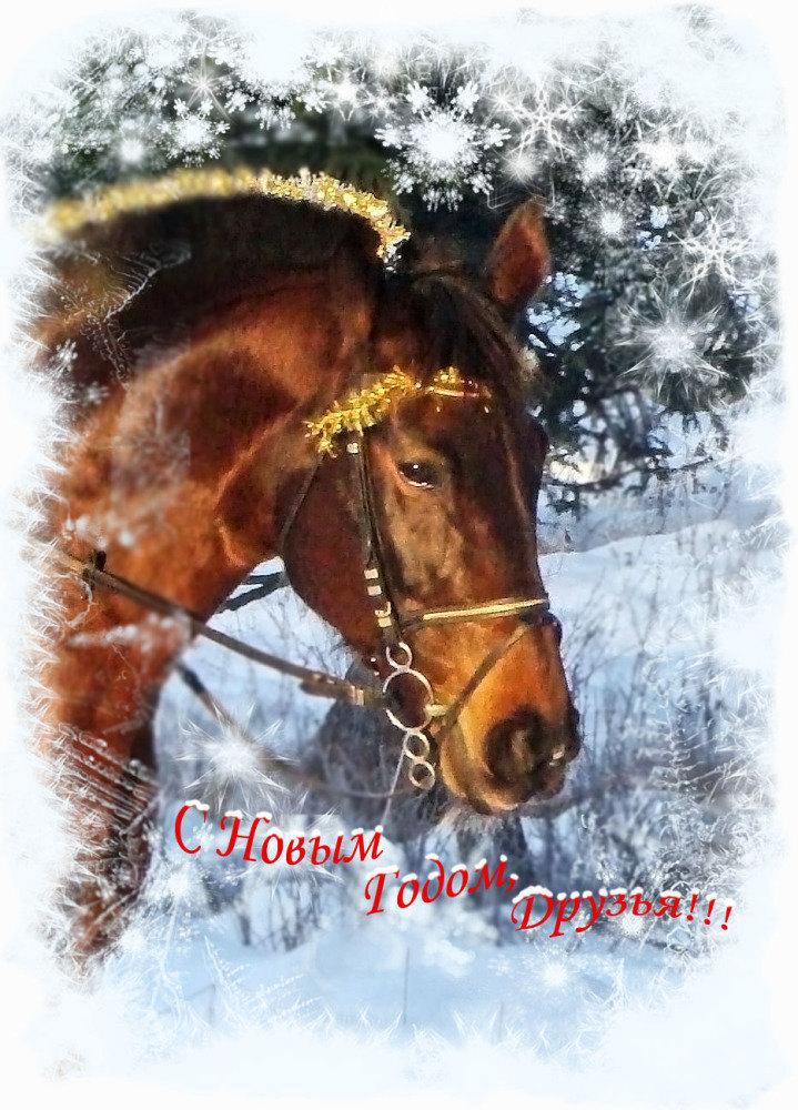... 2009 годом, друзья!!! Успехов, вдохновения и любимых лошадок рядом!!!