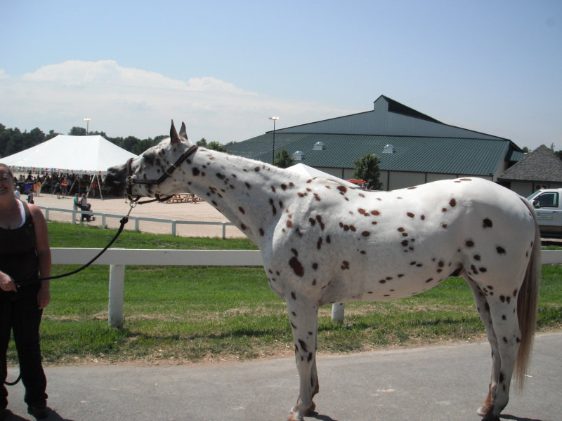 At the Lexington Kentucky Horse Park, Breyerfest in Kentucky, America. July 2012