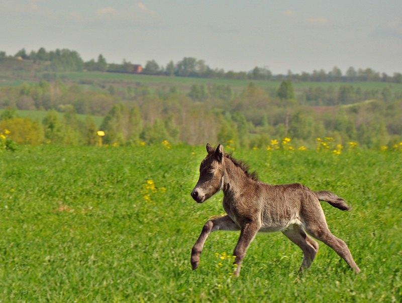 Малышка 3-х дней отроду! Посетите наш с айт mini-pony.ru