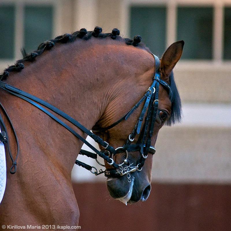Чемпионат Ярославской области по конному спорту