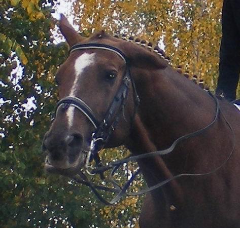 """Осенний портрет. 2007 г, 30 сентября. Соревнования по выездке. Лошадка после выступления: """"Ой, как я замаялася!!!"""" :)"""