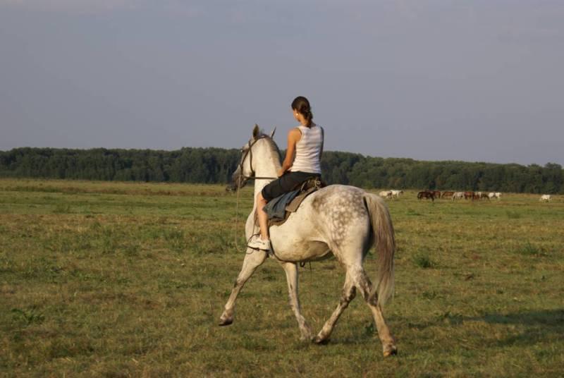 Полька пасет маток