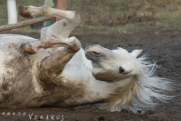 вот они, белые лошади, им только дай - все, конец белой сказкееее.....