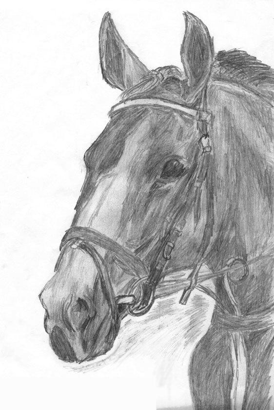 """Лошадь, срисованная с фото в альбоме """"В звонком топоте копыт"""" А.Бегуновой"""