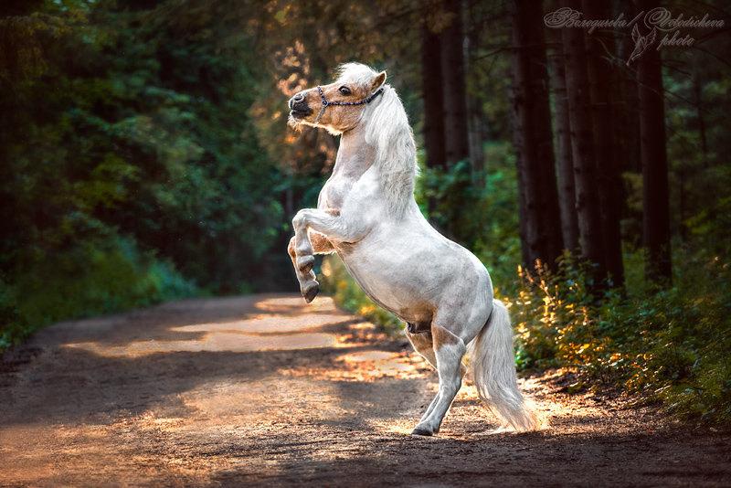 Шетлендский пони - Пломбир