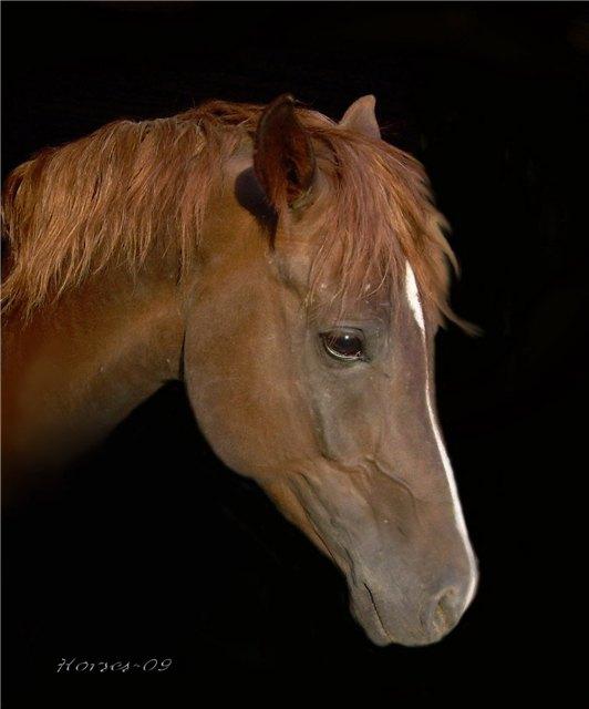 Добрый коня...