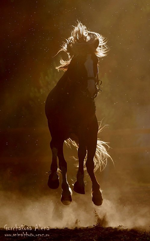 Дикий и буйный огненный конь))