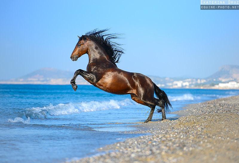 Молодой андалуз знакомится с морем:) Греция.