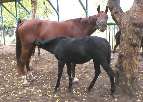 Мотя (4 года) и Маслина (6 мес)
