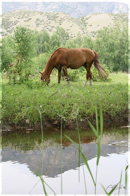 Лошадь, зелень и вода. Настоящий рай... :)