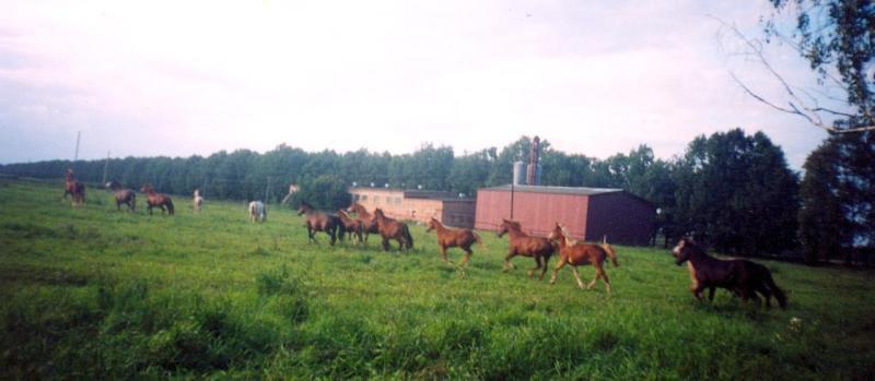 Лошади Курска остатки конюшни