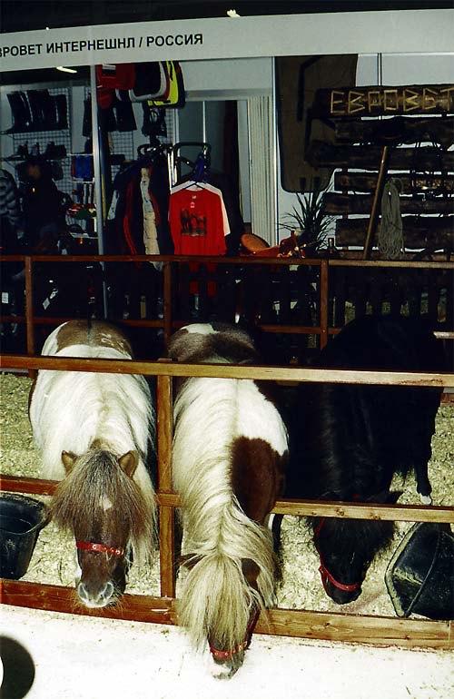 Миниатюрные лошадки были представлены на выставке компанией Евровет.