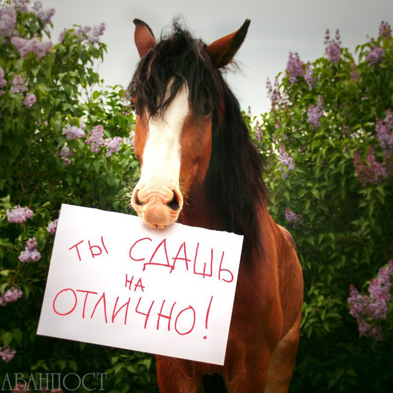 Фото Елены Серовой