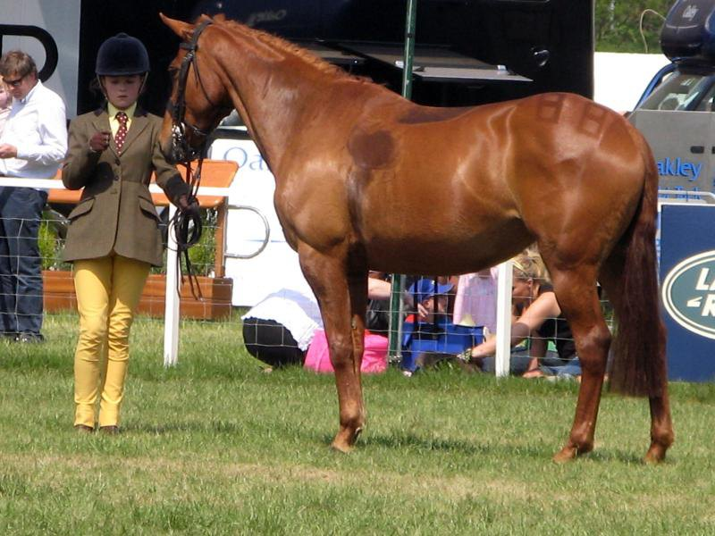 Royal Windsor Horse Show, UK