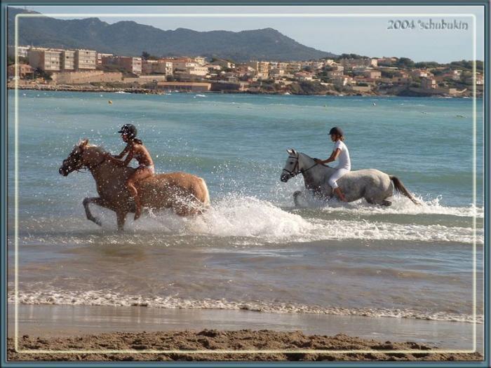 участницы соревнований расслабляют своих лошадей после конкура
