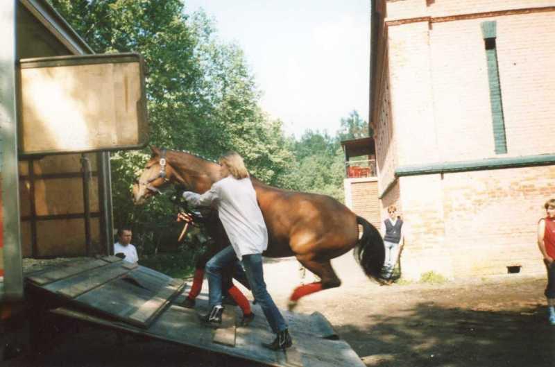 Соревнования в кск Медвежий Стан. 2005г. Всадник и лошадь очень хотят домой!      Да простит меня автор этого фото.