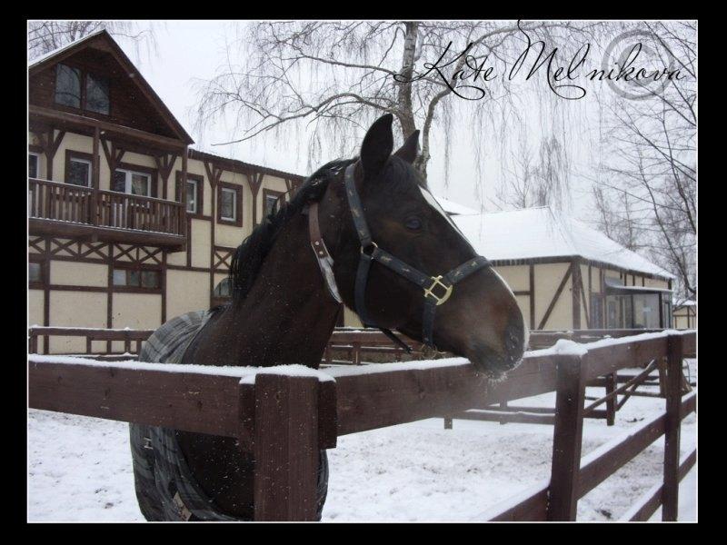 Конь Викарий